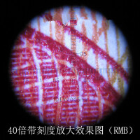OUJIN 40倍80倍100倍150倍袖珍光源显微镜玉石古玩字画鉴定放大镜带刻度显微镜放大镜