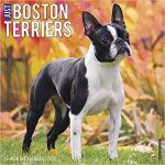 【预订】Just Boston Terriers 2020 Wall Calendar (Dog Breed Cale