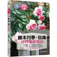藤本月季 玫瑰12月栽培笔记