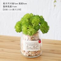 创意植物小摆件室内客厅仿真多肉植物绿植迷你小盆景装饰
