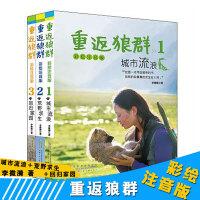 重返狼群 彩绘注音版正版书籍 三本套城市流浪荒野求生回归家园 适合低年级阅读1-3年级 一人一狼关于