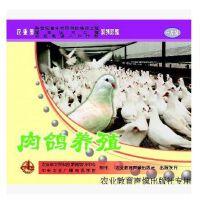 原装正版 肉鸽养殖 VCD 光盘 农业教育