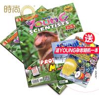 Young Scientists lv1(小小科学家 阶段1)杂志2020年全年杂志订阅一年共10期 7月起订 随机送
