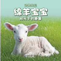绵羊宝宝阳光下的趣事