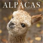 【预订】Alpacas 2020 Wall Calendar 9781549205095