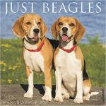 【预订】Just Beagles 2020 Wall Calendar (Dog Breed Calendar) 97
