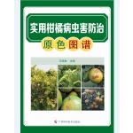 实用柑橘病虫害防治原色图谱