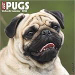 【预订】Just Pugs 2020 Wall Calendar (Dog Breed Calendar) 97815