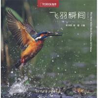 飞羽瞬间:中国野生鸟类精彩图片选(第1卷)【正版收藏旧书,满额减】