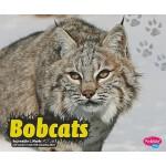 【预订】Bobcats