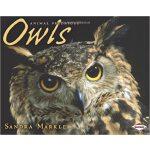 【预订】Owls