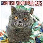 【预订】British Shorthair Cats 2020 Wall Calendar 9781549209093