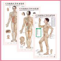 人体经络穴位挂图 (正、侧、背) 男性 3张/套 中医针灸穴位标准挂图 男女美容养生保健中医挂图 赠图解手册