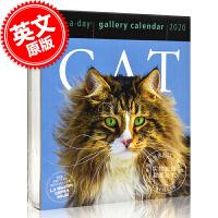 现货 2020年日历 关于猫的主题日历 一天一页 英文原版 Cat Page-A-Day Gallery Calendar 2020