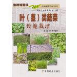 叶(茎)类蔬菜设施栽培