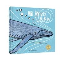 鲸鱼可以长多长