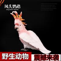 野生动物世界 鸟 凤头鹦鹉儿童实心仿真动物园玩具模型