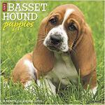 【预订】Just Basset Hound Puppies 2020 Wall Calendar (Dog Breed