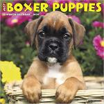 【预订】Just Boxer Puppies 2020 Wall Calendar (Dog Breed Calend