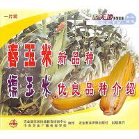 春玉米新品种-糯米优良品种介绍(一片装)VCD