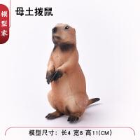 老鼠土拨鼠 松鼠仓鼠哈拉雪猪模型儿童礼物仿真实心野生动物玩具模型