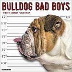 【预订】Bulldog Bad Boys 2020 Wall Calendar (Dog Breed Calendar