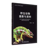野生动物摄影与赏析(山东艺术学院本科教材)