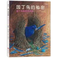 园丁鸟的秘密:日本著名绘本作家铃木守最作,揭开园丁鸟的奇妙建筑之谜