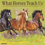 【预订】What Horses Teach Us 2020 Wall Calendar 9781549208225