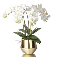 现代风格仿真蝴蝶兰花器客厅书房餐厅桌面花艺软装饰摆件精品花卉SN8497 金色 金铜色花器+花艺