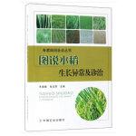 图说水稻生长异常及诊治