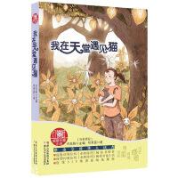 红蜻蜓暖爱长篇小说:我在天堂遇见猫