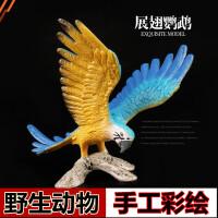 野生动物世界鸟 鹦鹉男女孩礼物儿童实心仿真动物园玩具模型