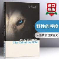 野性的呼唤 The Call of the Wild英文原版小说书 英国现实主义文学