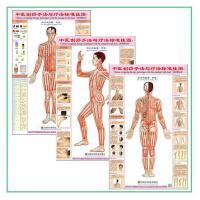 中医养生 刮痧/针灸手法与疗法标准挂图 穴位保健图双面正侧背