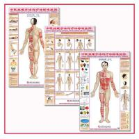 中医针灸拔罐手法与疗法标准挂图穴位保健图双面正侧背,穴位