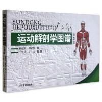 运动解剖学图谱修订第3版 肌肉塑造教程全书 人民体育健身书籍 肌肉健美训练图解 医学实用性人体图谱 运动生理学医学书籍