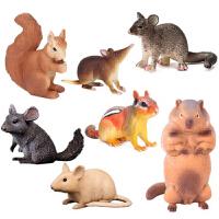 仿真野生动物玩具模型儿童实心松鼠家鼠仓鼠金花鼠花栗鼠土拨鼠