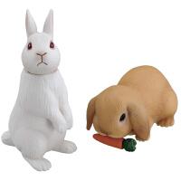 安利��野生�游锬P头抡�和��J知男玩具白兔子�}卜