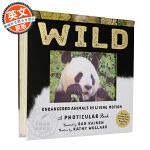 野生动物 3D立体动画书 英文原版 Wild: A Photicular Book 少儿英语启蒙 自然科学 光与影视觉