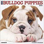 【预订】Just Bulldog Puppies 2020 Wall Calendar (Dog Breed Cale