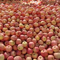 【沂蒙馆】  山东特产新鲜水果中庄沂源红富士苹果10斤装
