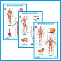 人体肌肉神经系统解剖挂图3张/套中西医保健养生