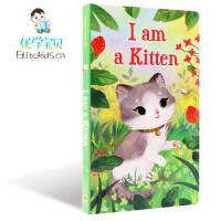 英文原版绘本I Am a Kitten 我是一只小猫 I am a bunny同系列名家 richard scarry