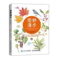 原野漫步 250种植物果实与红叶的手绘自然笔记