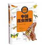 中国之美 自然生态图鉴 中国昆虫图鉴 9787537743563