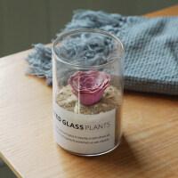 【好货优选】办公室生日礼物创意多肉懒人好养玻璃杯仙人掌球植物室内装饰摆件办公桌面花卉小盆栽 含盆