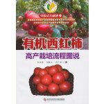有机西红柿高产栽培流程图说