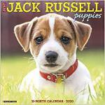 【预订】Just Jack Russell Puppies 2020 Wall Calendar (Dog Breed