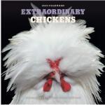 英文原版 世界各地非凡的鸡 2020年挂历 动物摄影 新年日历 Extraordinary Chickens 2020